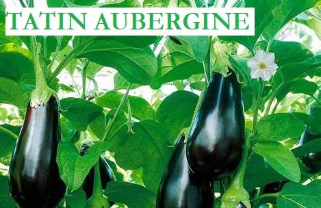 Tatin d'aubergine  #13